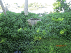 Overgrown vegetation around the overflow structure on Wilderness Cay.