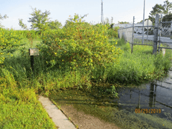 Thick vegetation within the retention ponds outside the water plant.